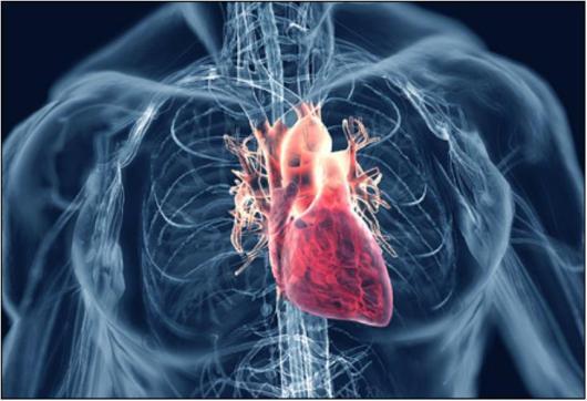 cardiovascular_system2