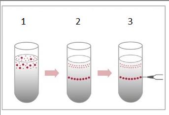 """La centrifugación en gradiente de densidad es la técnica estándar requerida científicamente para La demostración de la existencia de un virus. A pesar de que este método se describe en todos los manuales de microbiología como la """"técnica de aislamiento de virus"""" nunca se aplica en experimentos destinados a demostrar la existencia de virus patógenos."""